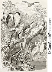 Wading birds - Grey Heron, Little Bittern, Black-crowned...