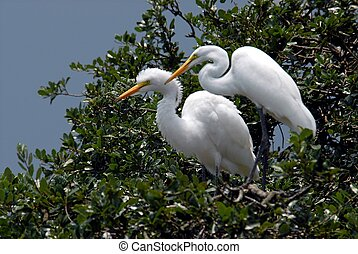 Photographed white herons at local nature trail in Florida.
