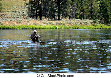 man going fly fishing in yellowstone national park, wading across the river