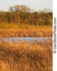 wadsworth, conserva, pradera, naturaleza, illinois