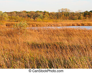 Wadsworth Prairie Nature Preserve Illinois