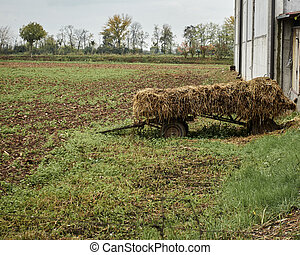 wagon with hay in the farm