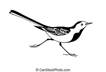 wagtail silhouette on white background, vector illustration