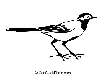 wagtail, vector, silhouette, witte achtergrond