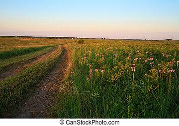 wah'kon-tah, coneflowers, prairie, chemin, pourpre