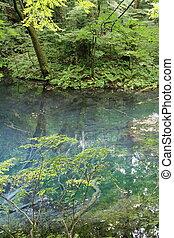 Wakitsubo pond in Shirakami Sanchi, Aomori, Japan