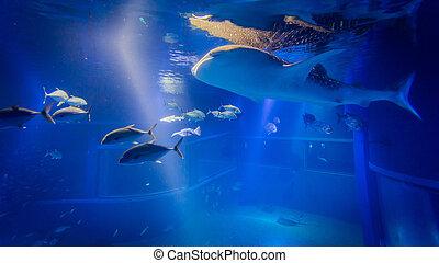 Wal, hai,  Aquarium