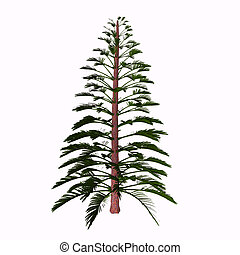 Walchia Tree - Walchia is a fossil conifer, cypress-like...