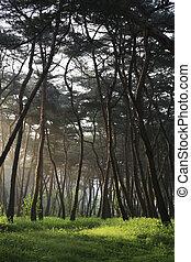 wald, bäume, von, grün