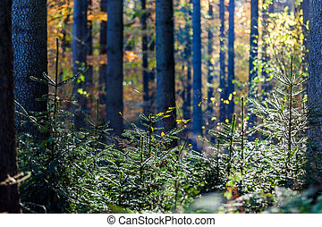 wald - herbst