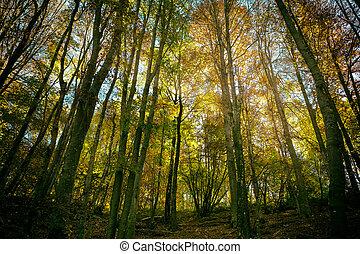 wald, in, der, herbst, der, sonne, shines, durch, der, bäume, piani, d'erna, lecco, italien