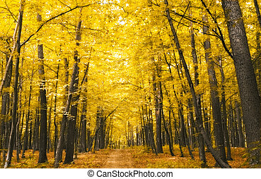 wald, in, herbst