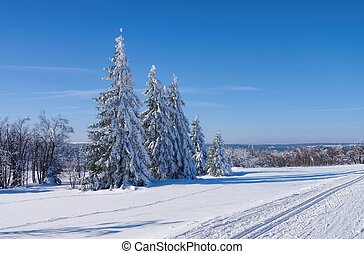 wald, in, winter