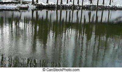 wald, reflexion, in, wasser