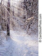 wald, sonnig, winter, tag, eisig