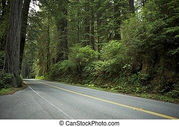 wald, straße, redwood