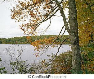 Walden Pond, Concord, MA