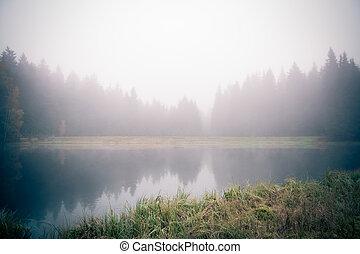 waldsee, in, der, morgen, nebel