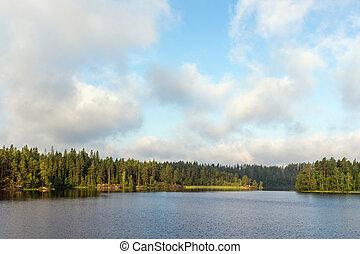waldsee, in, sommer