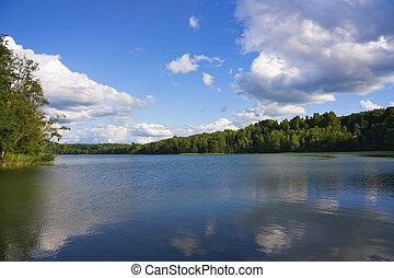 waldsee, sommer