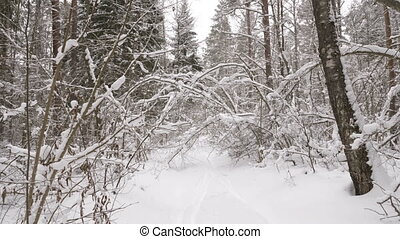 Walk along path in winter snow forest