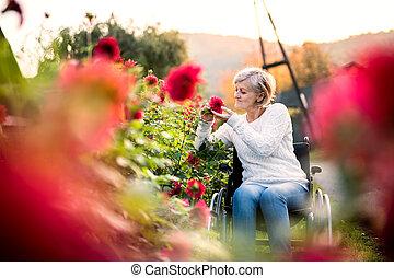 walk., fauteuil roulant, personne âgée femme