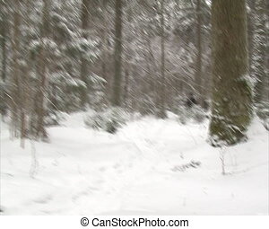 walk forest in winter