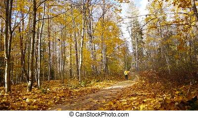 Walk in autumn forest
