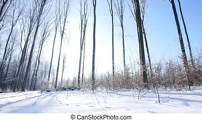 walk in frozen winter forest wide angle.