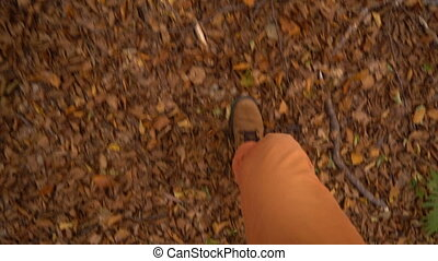 walk in the autumn forest