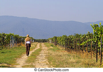 Walk in wineyards - man having a walk in wineyards