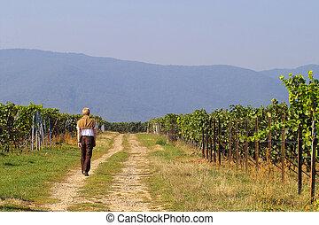 man having a walk in wineyards
