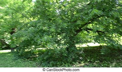 walk lime tree branch