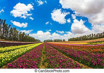 Farm field of fine flowers