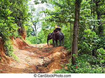 Walk on an elephant in jungle, Thailand
