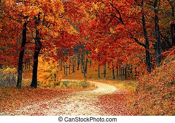 Walk on the autumn road