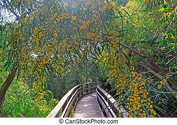 walk path and mimosa