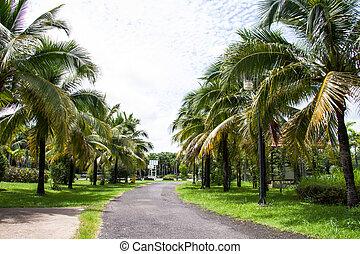 Walk path in Coconut garden at becket, Thailand
