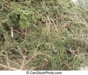 walk stack branch fir