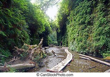 walk through fern canyon