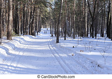 Walk through the winter forest, beauty and harmony.