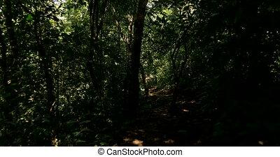 Walk To Cascada El Pavon, Costa Rica - Native 4:2:2, 10 Bit...