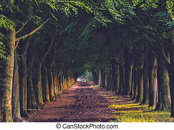 Walkaway in the spring forest