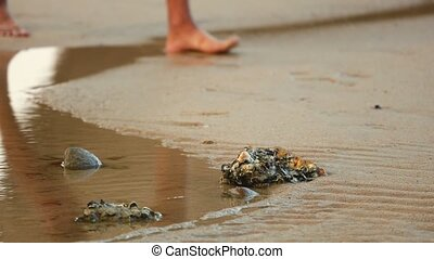 Walkers Feet On A Beach With Sandy Rock Pools