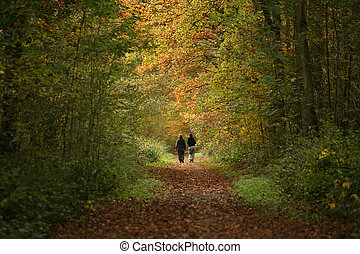 Walkers on Forest path - 2 women walking along woodland path...