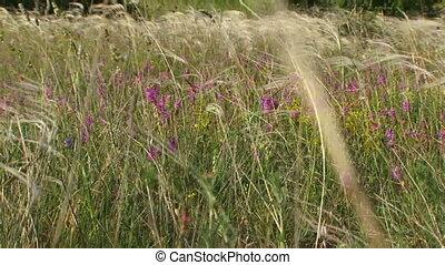 Walking across the field - Beautiful feet girls go on a...