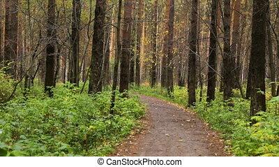 Walking along a path in park