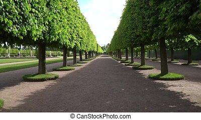 Walking along the green alley in the park. - Walking along...