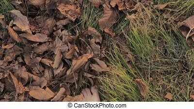 Walking barefoot on fallen leaves on the ground, slow motion