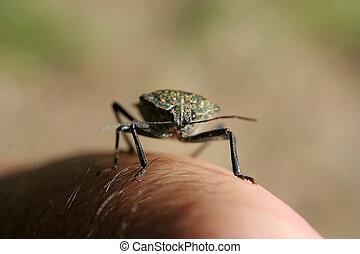 walking bug